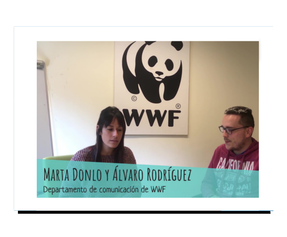 Imagen del trabajo WWF: diagnóstico y estrategia de redes sociales
